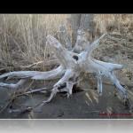 Narragansett RI Driftwood