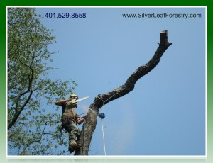 Silver Leaf Forestry- RI Tree Needs