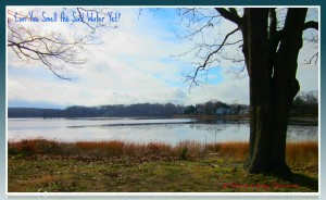 Wickford RI Bissel Cove real estate