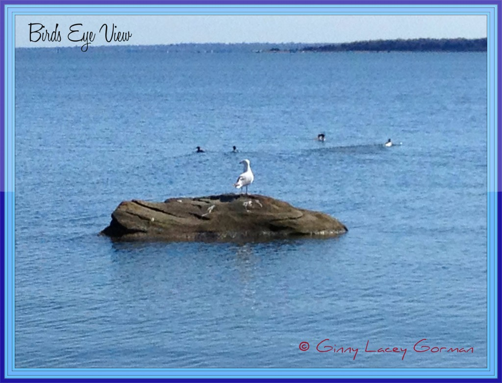 Waterfront Rhode Island Living-Rhode Island Real Estate