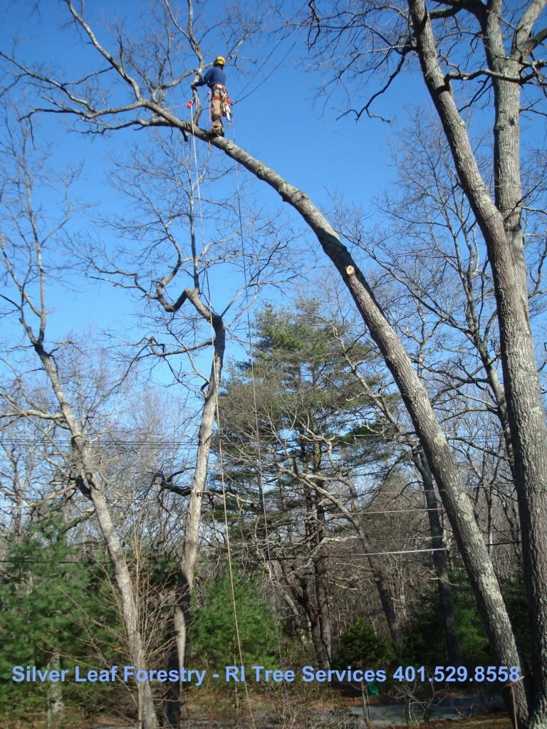 Hurricanes & Trees | Silver Leaf Forestry | Tree Maintenance in ri real estate