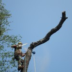 Silver Leaf Forestry - Arborist & Tree Services