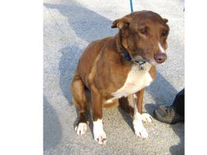 North Kingstown pet and animal shelters